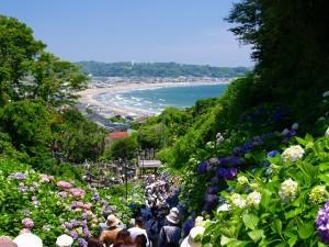 成就院紫陽花と海画像