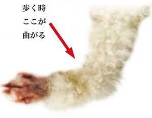 足の関節が曲がってる画像